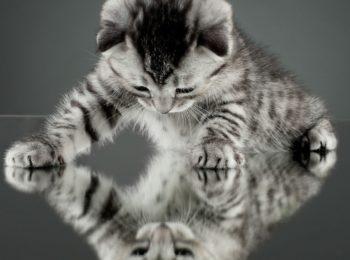 Тест на кошку