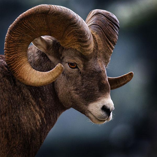 Зороастрийский знак зодиака Баран
