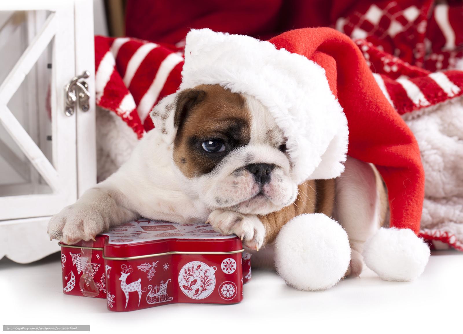Новый Год Желтой Земляной Собаки