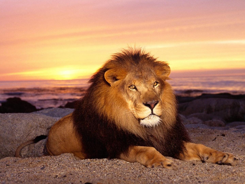 Лев и совмещение Восточных знаков зодиака