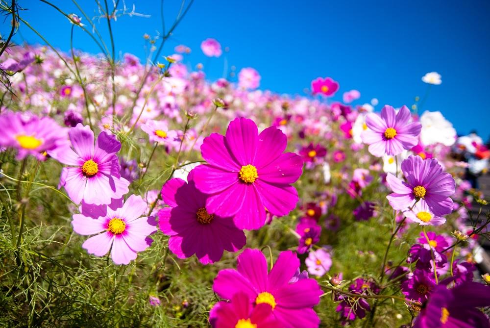 Цветы во сне