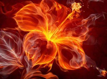 Знаки Зодиака стихии Огня