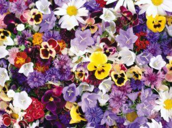 Какой Вы цветок
