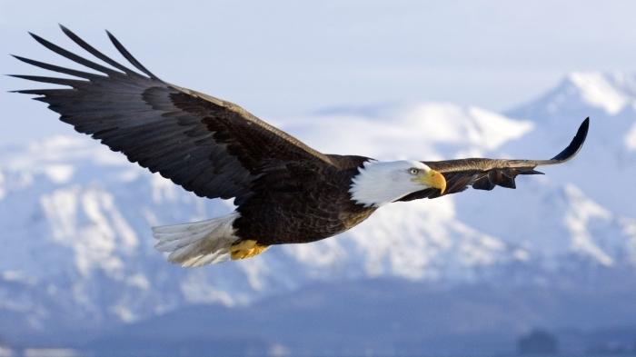 Зороастрийский знак зодиака Орел
