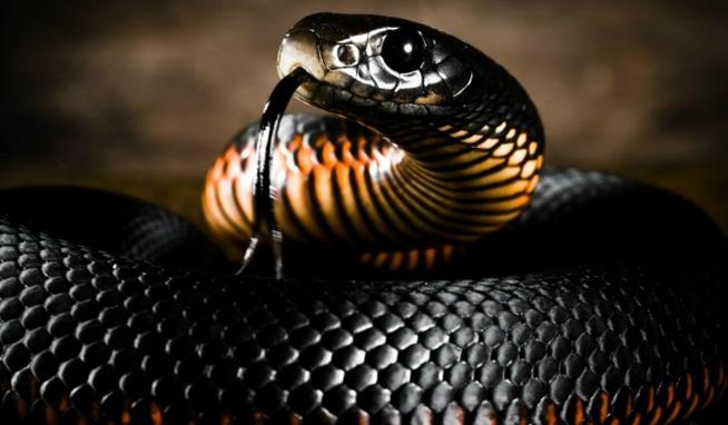 накшатра Змей