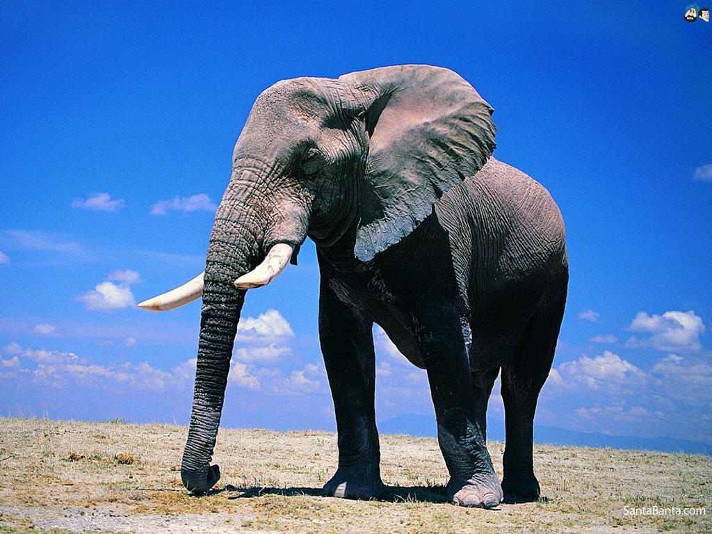 Зороастрийский знак зодиака Слон