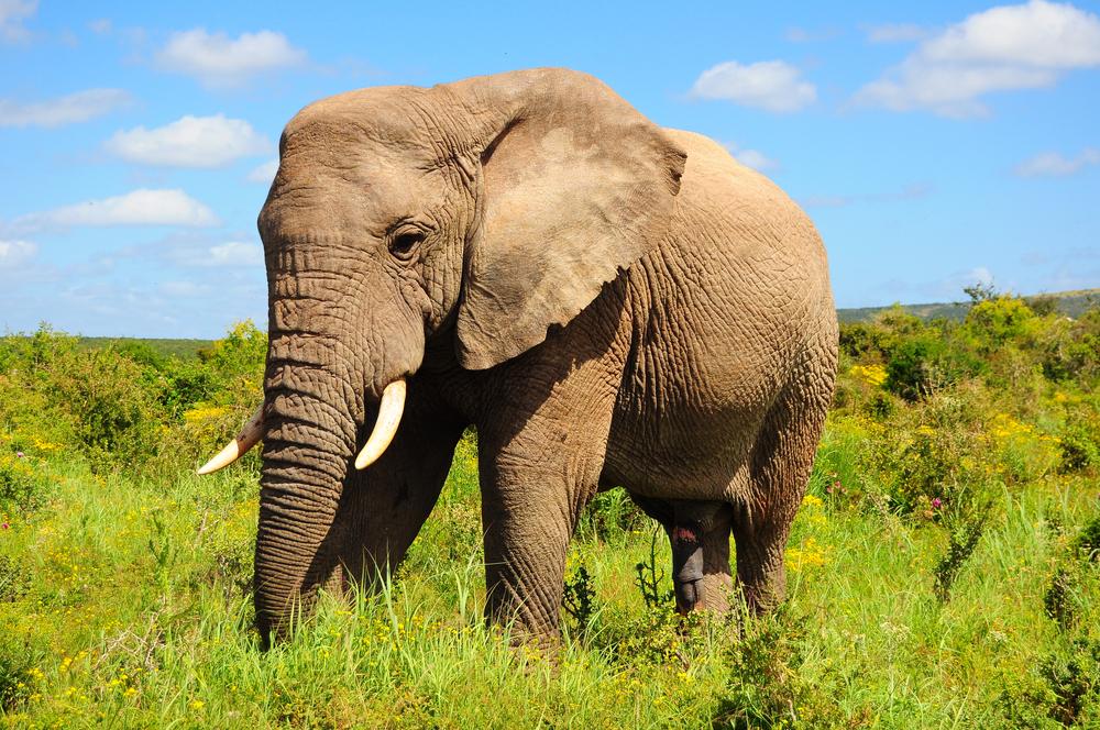 Накшатра Слон