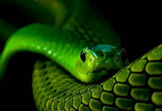 Зороастрийский знак зодиака Змея