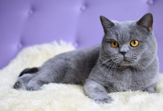 Накшатра Кот