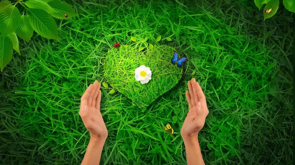 травы-талисманы для любви