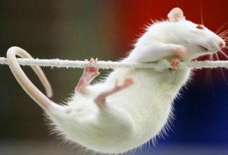 накшатра Крыса