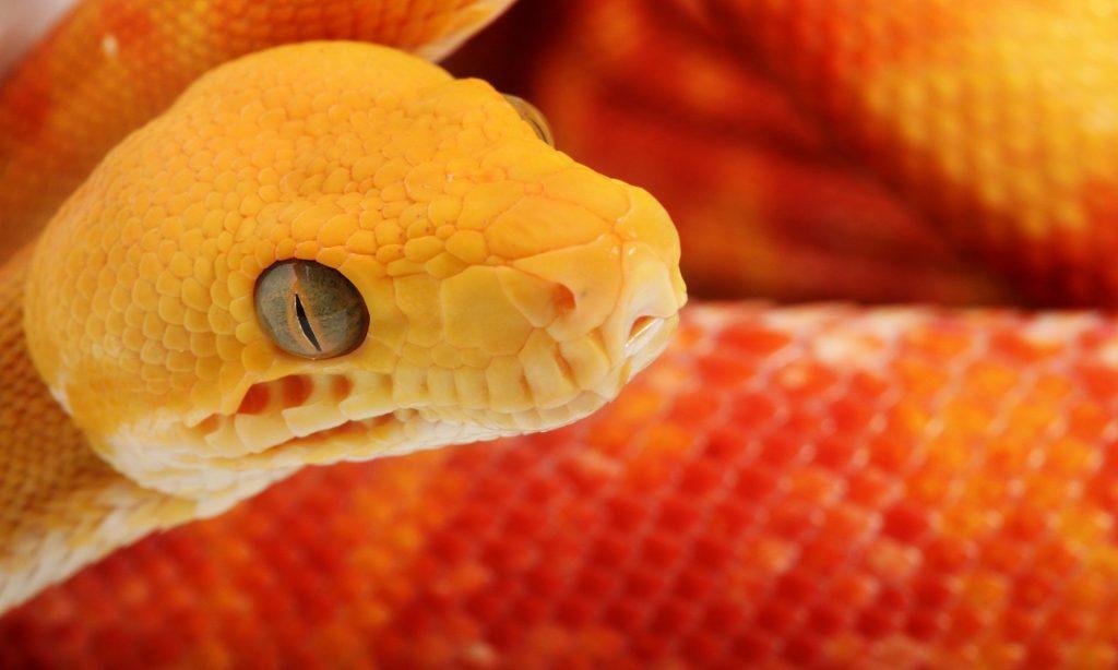 Накшатра Змея