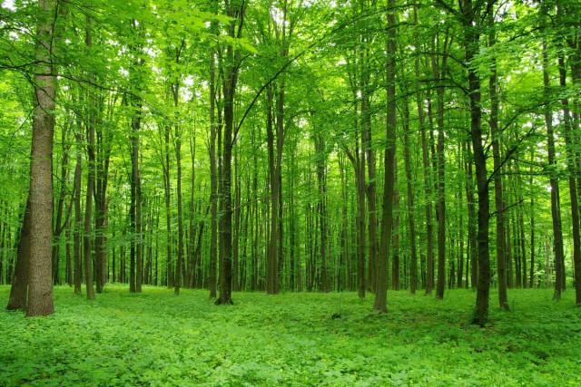 Лес во сне