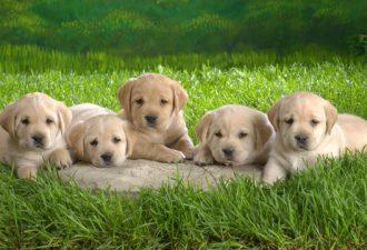 гороскоп для собаки