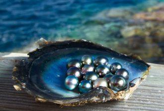 камень жемчуг