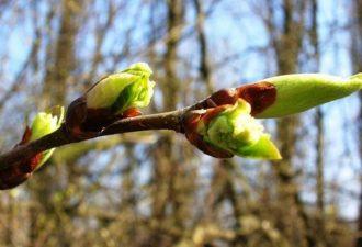 Гороскоп для Овна на месяц апрель