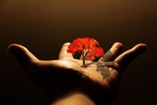 мужчина дерево