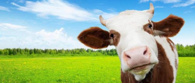 накшатра корова