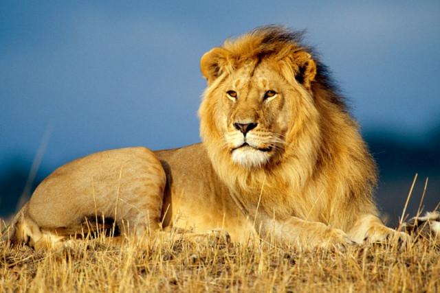 Накшатра Лев