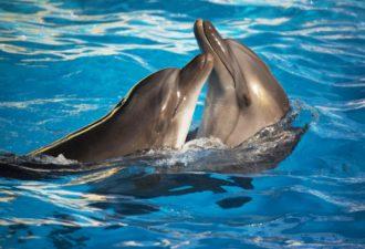 Дельфин во сне