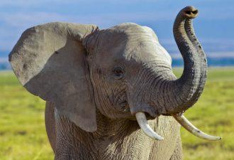 накшатра слониха