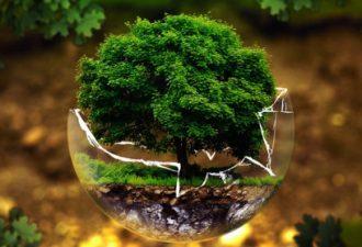 Стихия Дерево по фэн-шуй