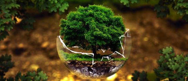 Фэн шуй золотое дерево | Совет мастера Дао