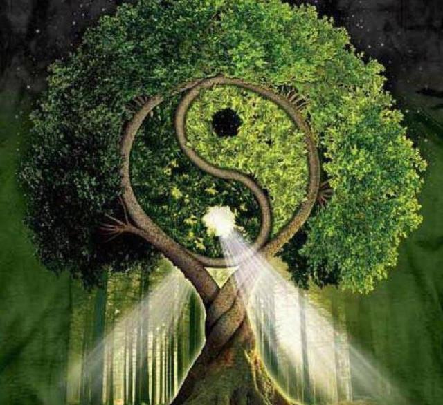 Дерево Ян