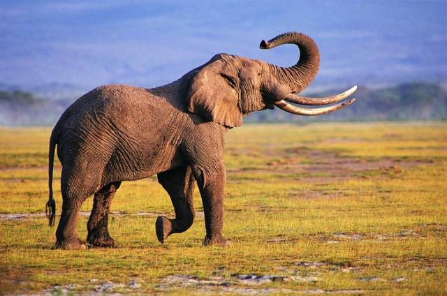 слон во сне