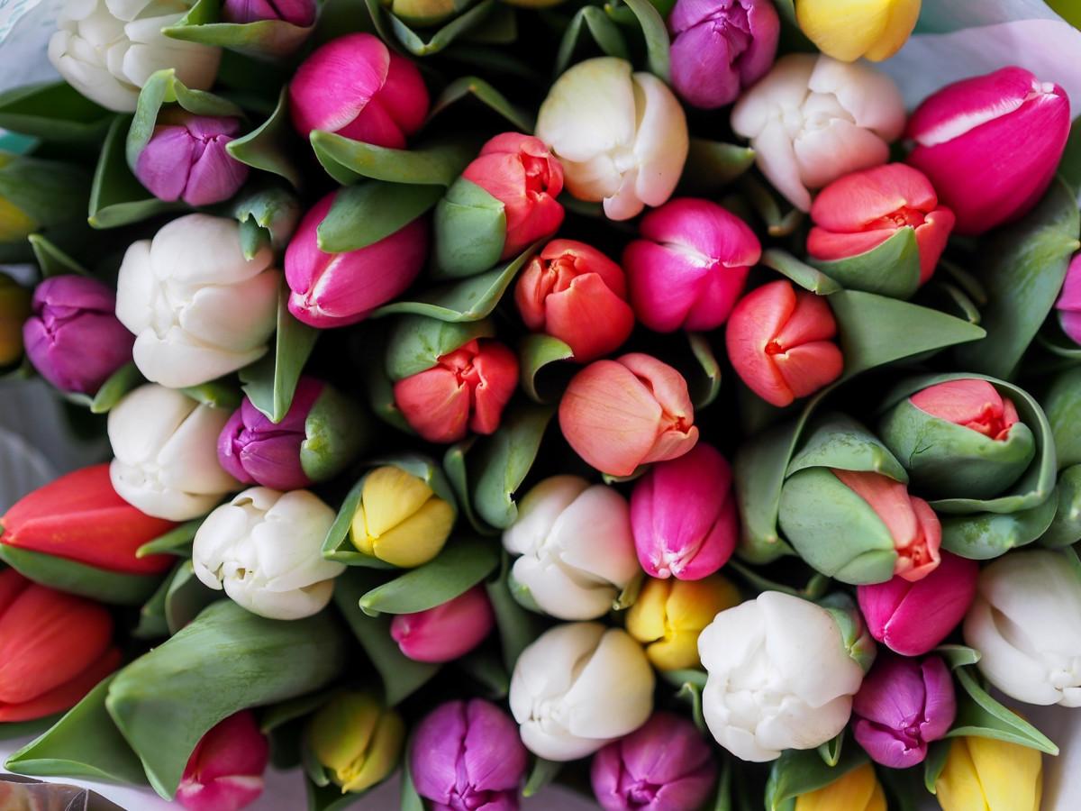 Знак Тюльпан