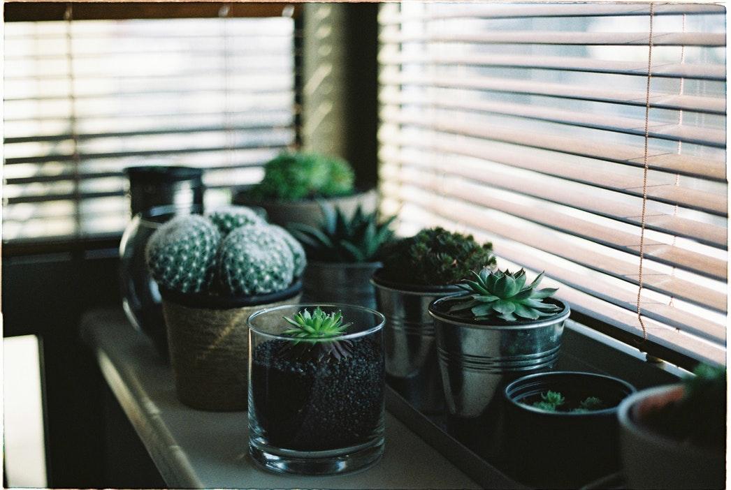 Комнатные растения как обереги