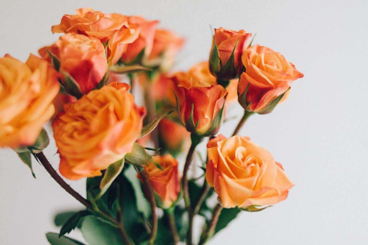 Знак Роза