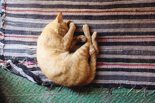 Направления сна по фэн-шуй