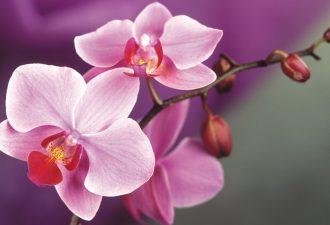 Знак Орхидея